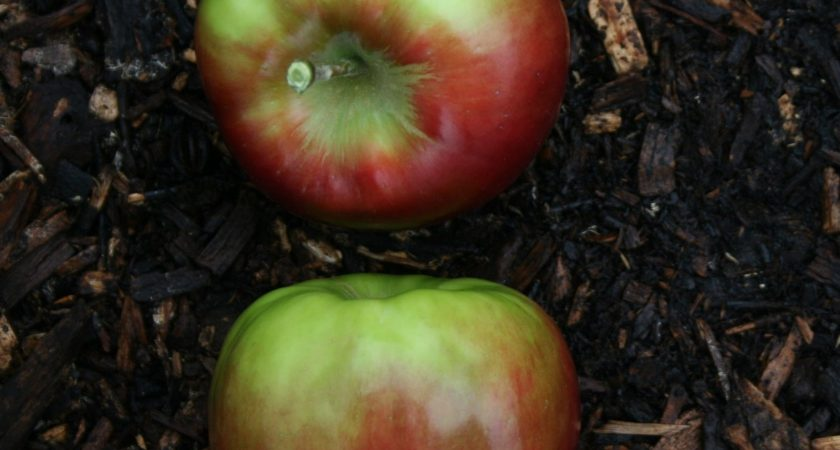 Healthy & Fruitful Leadership – Part Two